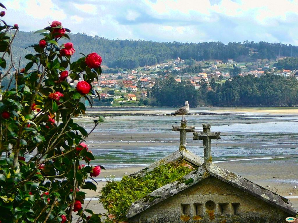 Rías Baixas: Shellfishing, vineyards and camellias